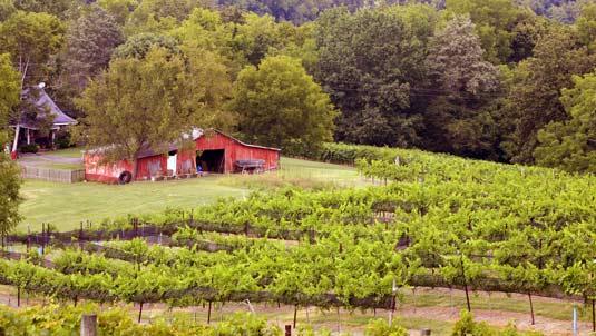 wine-tours